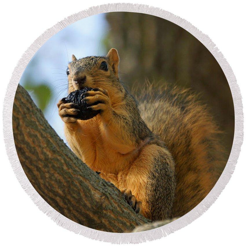 Birds Round Beach Towel featuring the photograph Squirrel by Lori Tordsen
