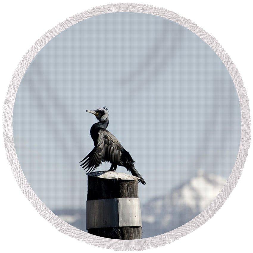 Cormorant Round Beach Towel featuring the photograph Cormorant Bird by Mats Silvan