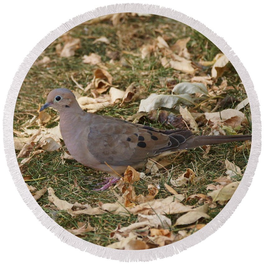 Birds Round Beach Towel featuring the photograph Doves by Lori Tordsen