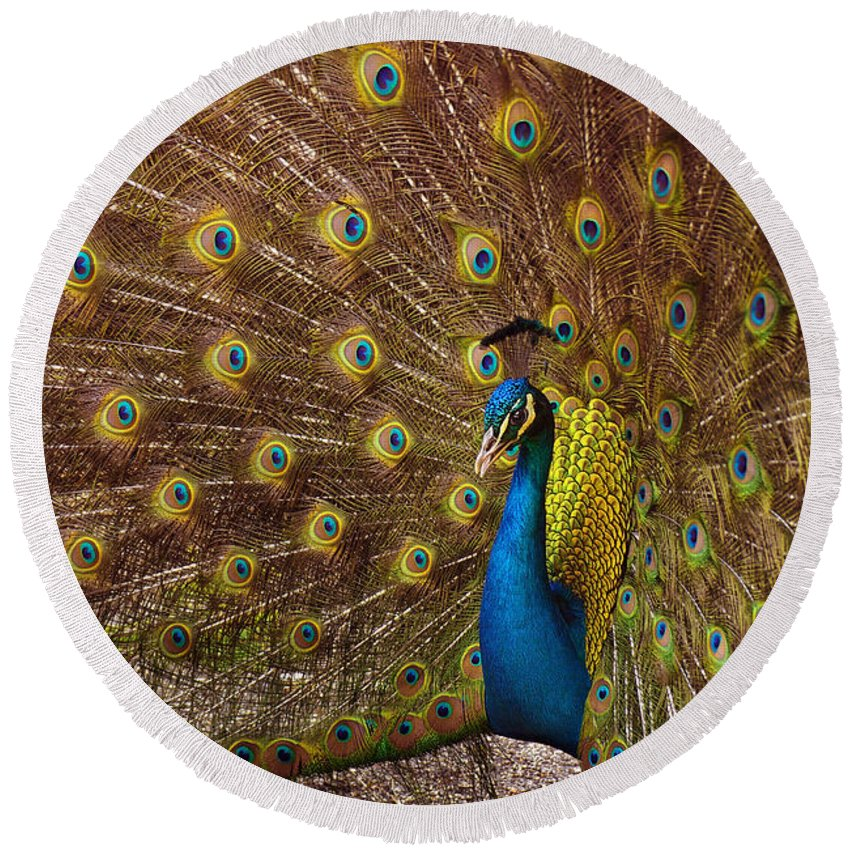 Animal Round Beach Towel featuring the photograph Peacock by Carlos Caetano
