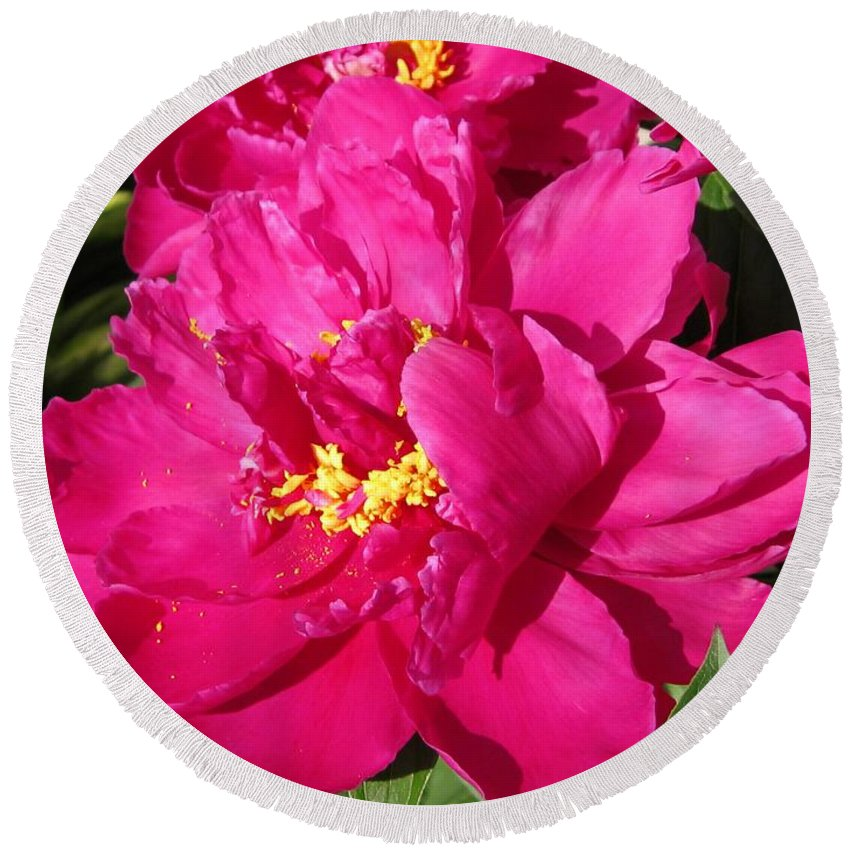 Peony Round Beach Towel featuring the photograph Peony Named Karl Rosenfield by J McCombie