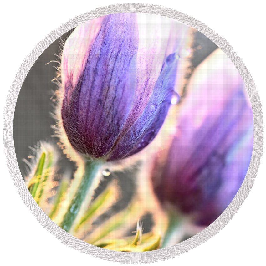 Spring Round Beach Towel featuring the digital art Spring Time Crocus Flower by Mark Duffy
