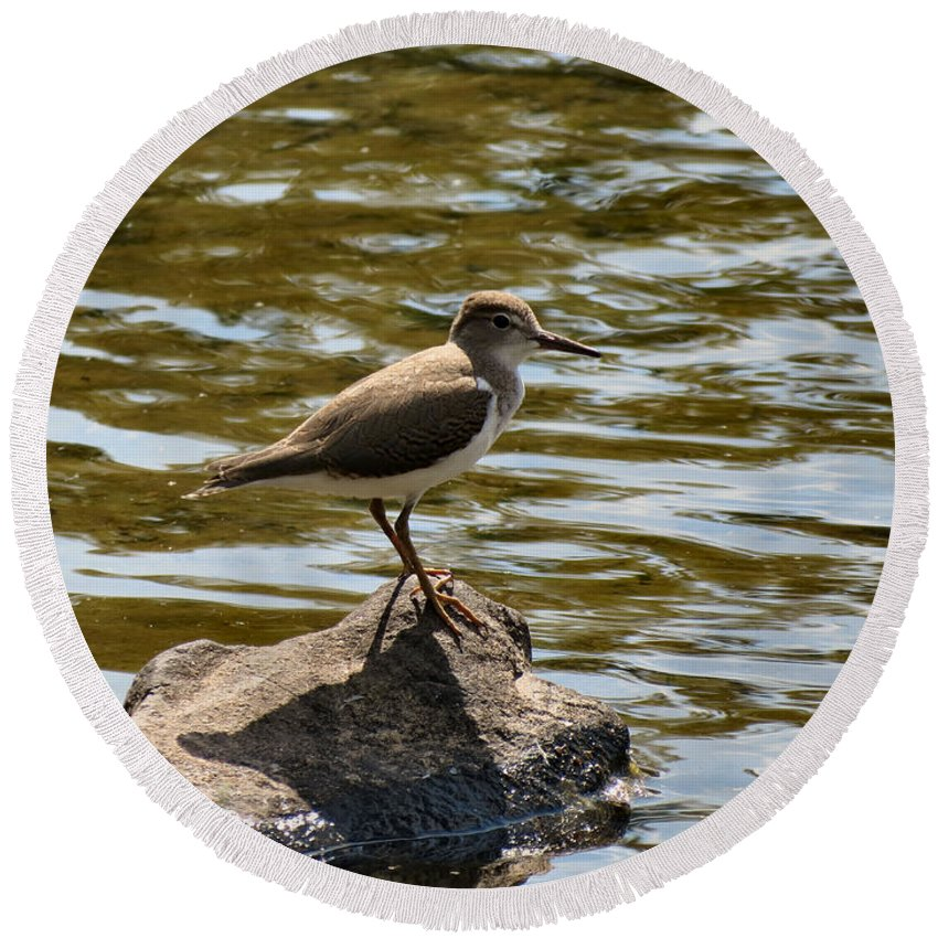 Killdeer Round Beach Towel featuring the photograph Wee One by Art Dingo
