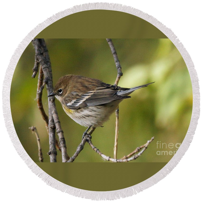 Birds Round Beach Towel featuring the photograph Yellow-rumped Warbler by Lori Tordsen