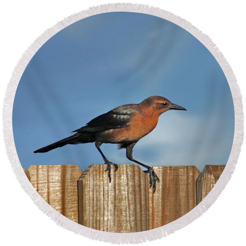Grackle Round Beach Towel featuring the photograph 27- Grackle by Joseph Keane
