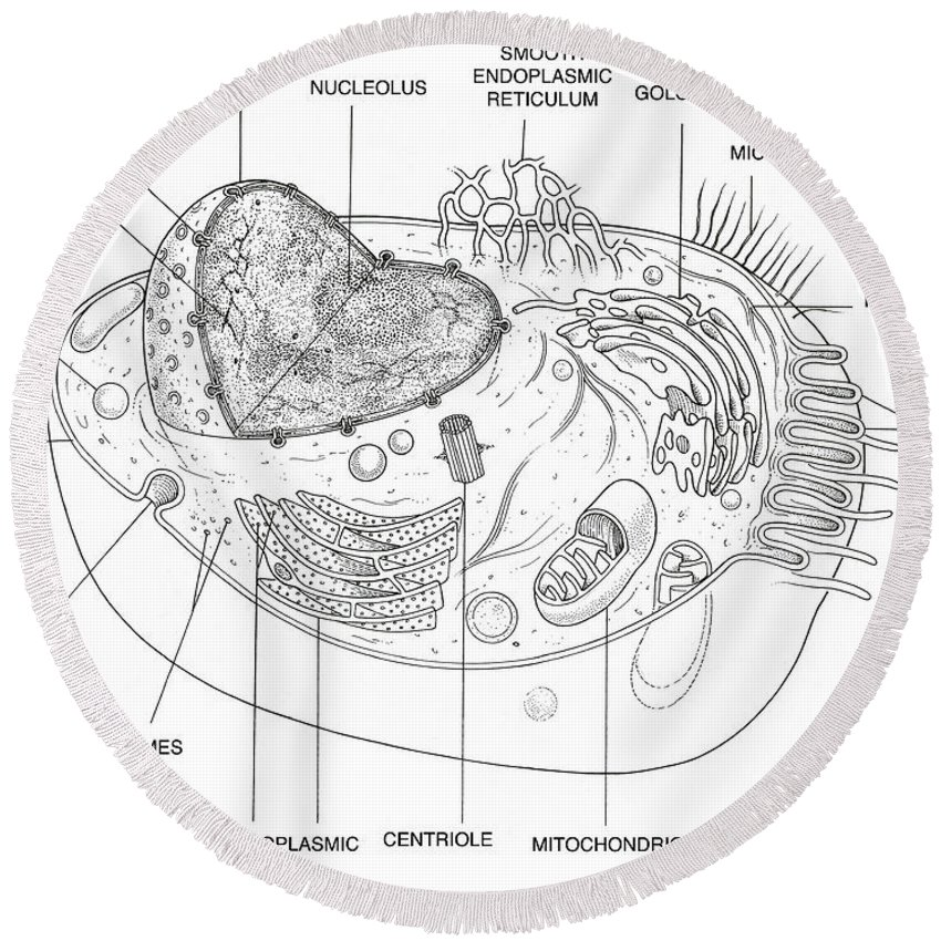 Animal Cell Diagram Round Beach Towel For Sale By Science Source