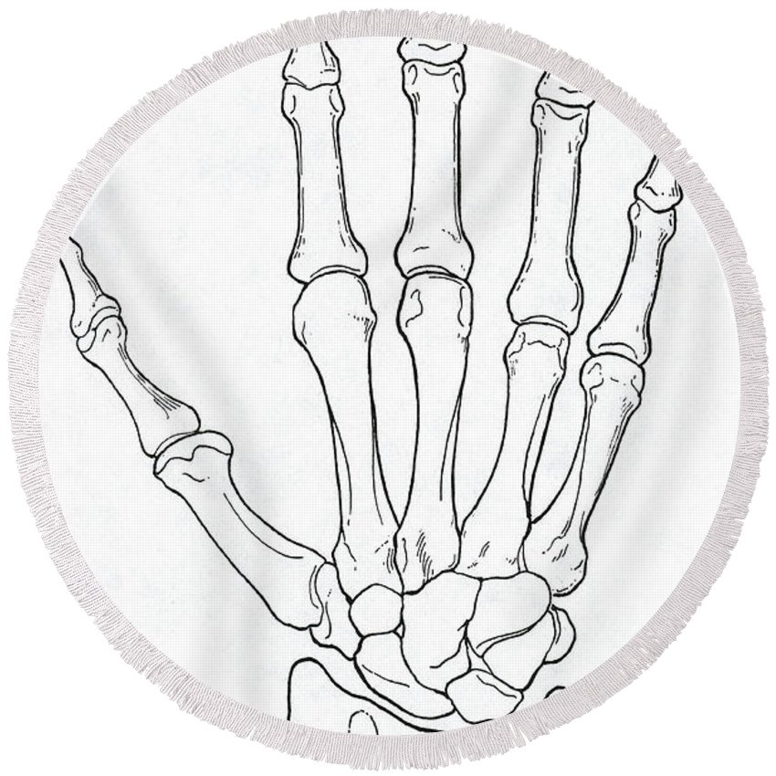 Hand And Wrist Bones Round Beach Towel For Sale By Science Source