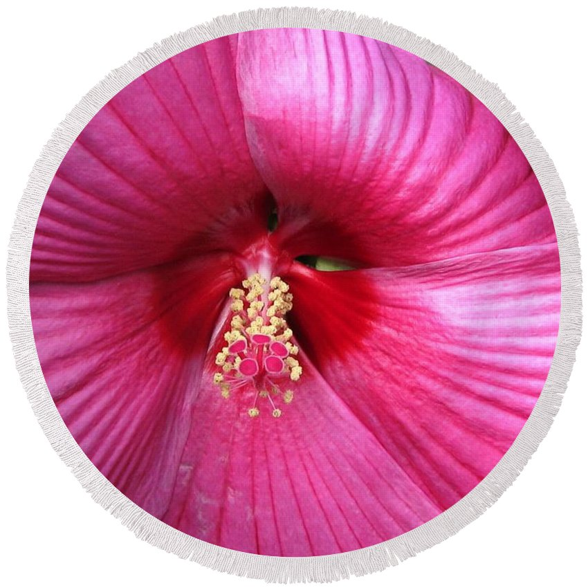 Hibiscus Moscheutos Round Beach Towel featuring the photograph Hibiscus Named Luna Rose by J McCombie