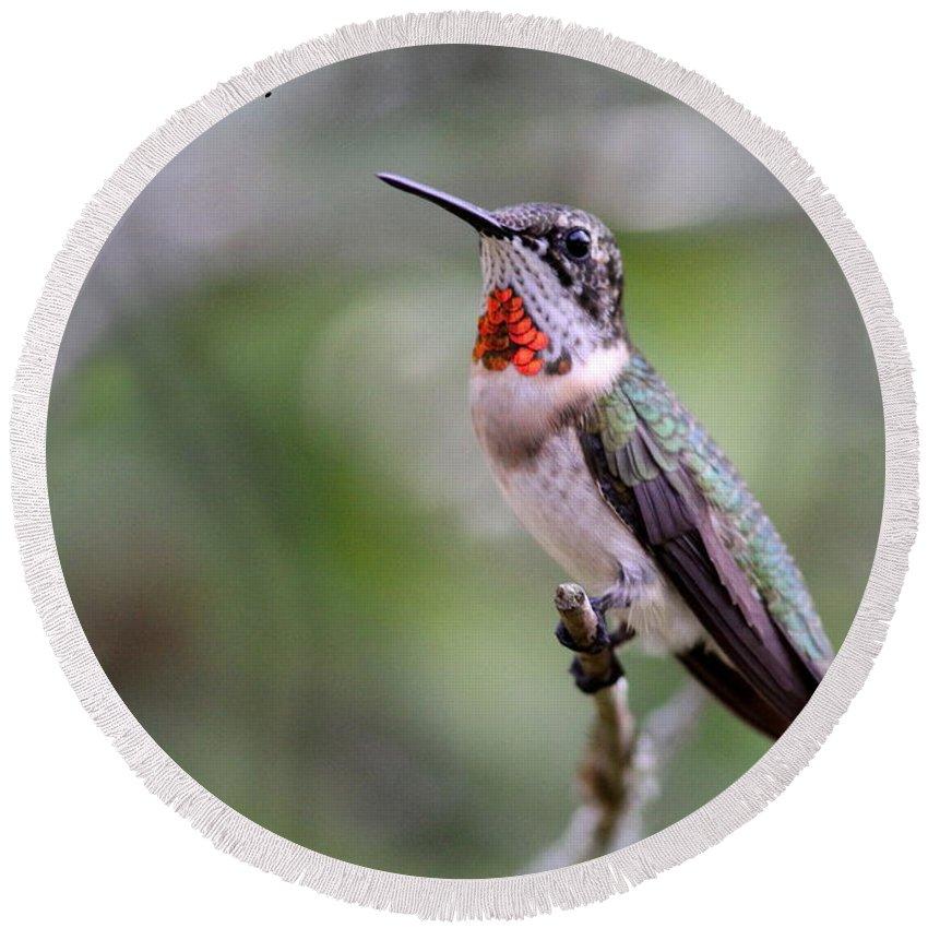 Hummingbird Round Beach Towel featuring the photograph Hummingbird Card by Travis Truelove