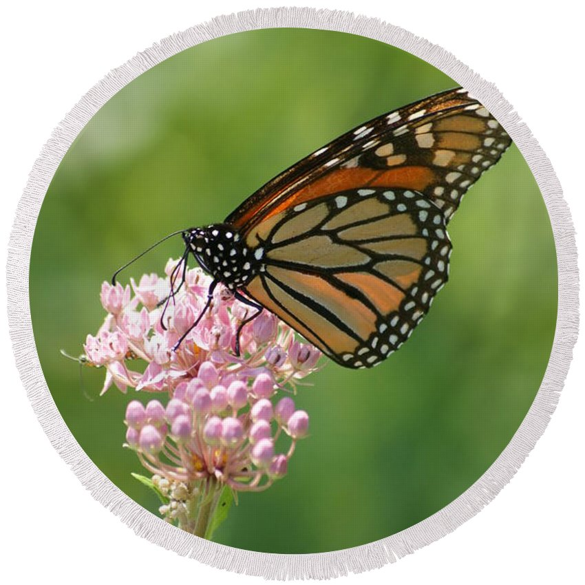 Milkweed Round Beach Towel featuring the photograph Monarch Butterfly by Heidi Poulin