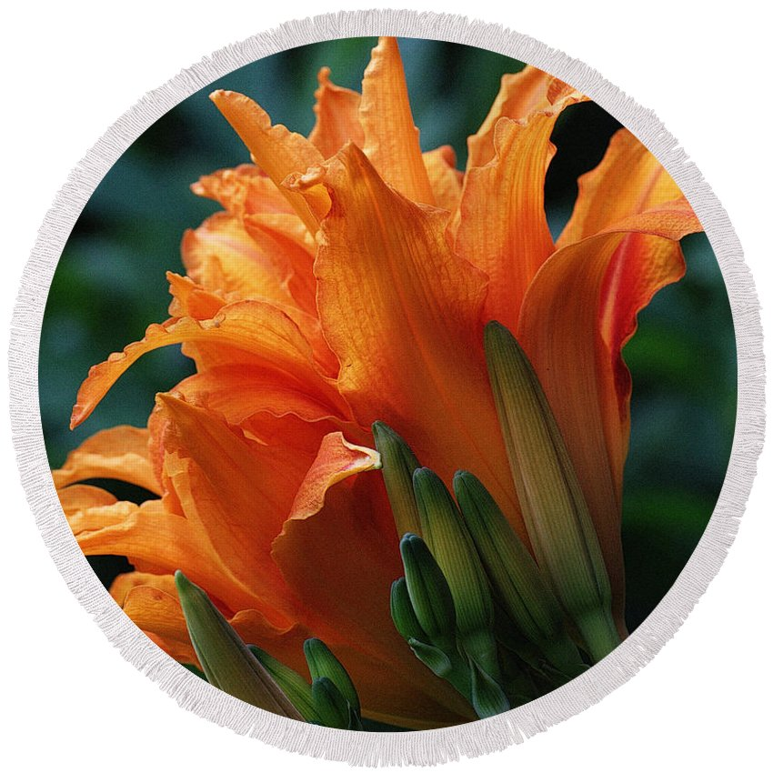 Orange Round Beach Towel featuring the photograph Orange Daylily by Mel Hensley