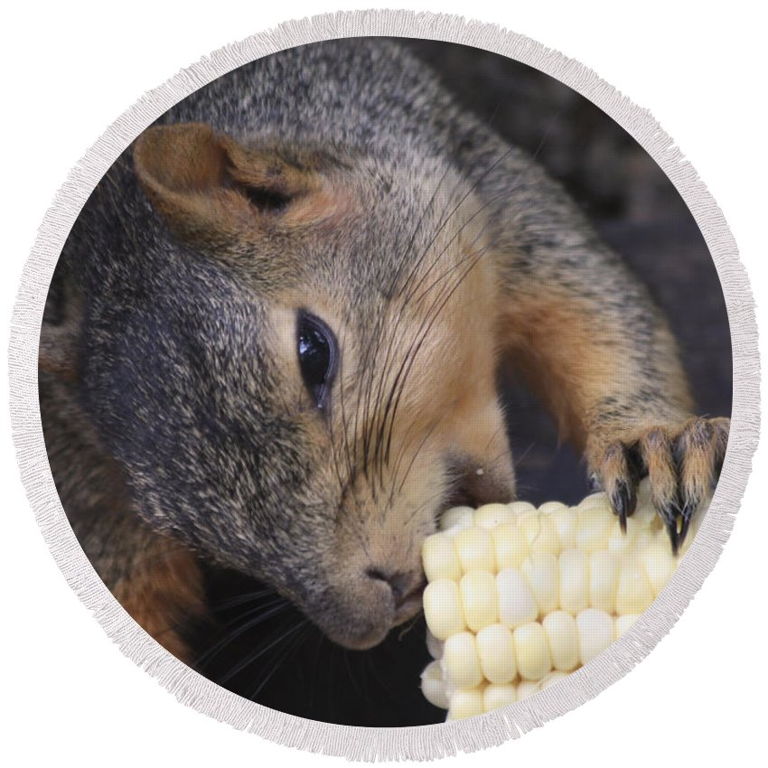 Squirrel Round Beach Towel featuring the photograph Squirrel Eating Sweet Corn by Lori Tordsen