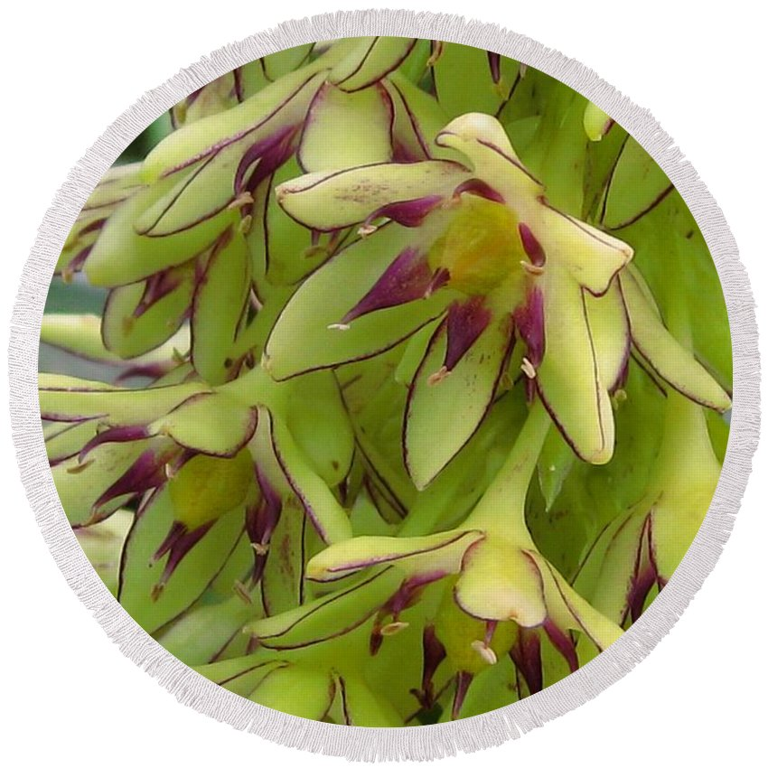 Eucomis Round Beach Towel featuring the photograph Eucomis Named Bicolor by J McCombie