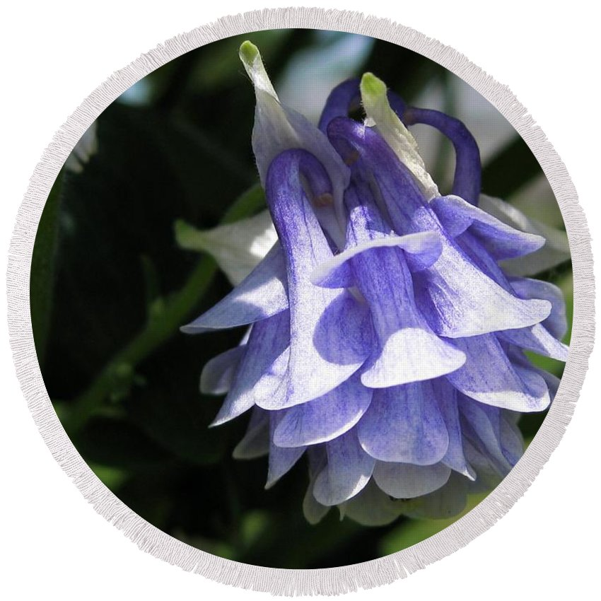 Double Columbine Round Beach Towel featuring the photograph Double Columbine Named Light Blue by J McCombie