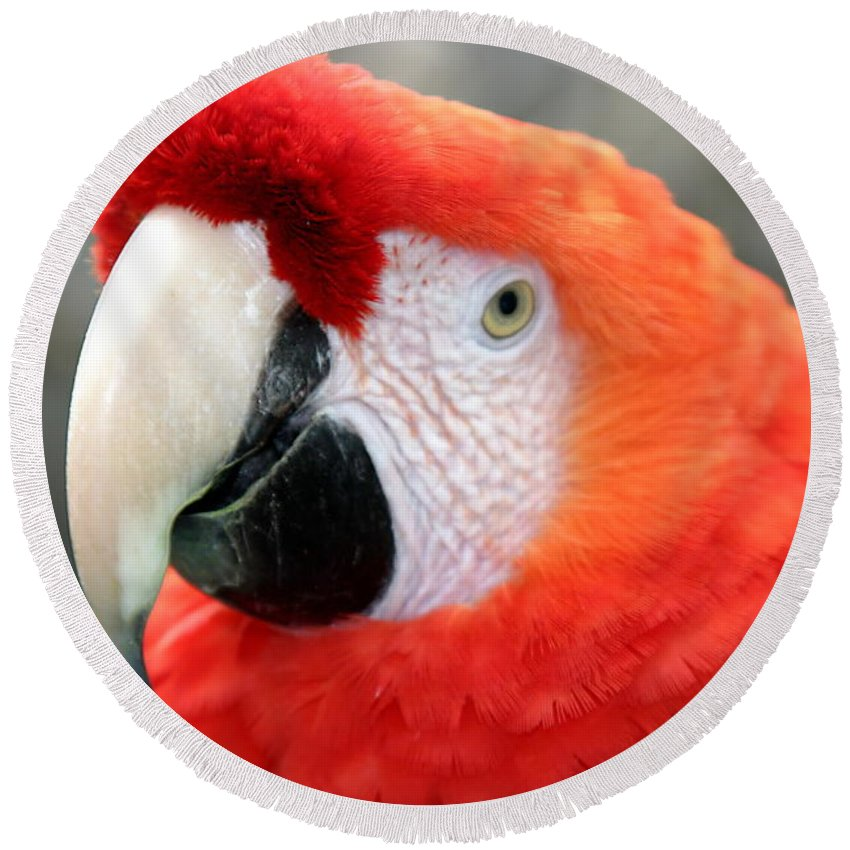 Red Round Beach Towel featuring the photograph Scarlet Macaw by Henrik Lehnerer