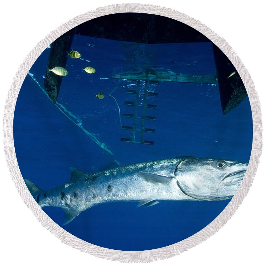 Osteichthyes Round Beach Towel featuring the photograph A Great Barracuda Beneath A Boat, Kimbe by Steve Jones