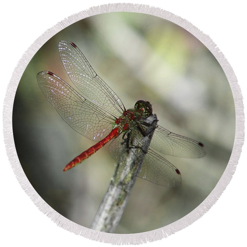 Dragonflies Round Beach Towel featuring the photograph A Red Dragonfly by Xueling Zou