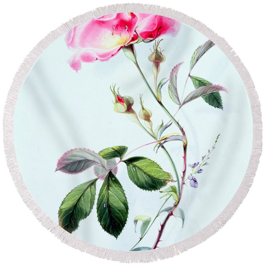A Rose (w/c) By James Holland (1799-1870) Flower; Bud; Leaves; Thorns Round Beach Towel featuring the painting A Rose by James Holland