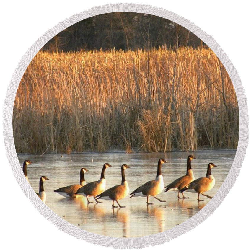 Canada Geese Round Beach Towel featuring the photograph A Walk In The Park by Peggy McDonald
