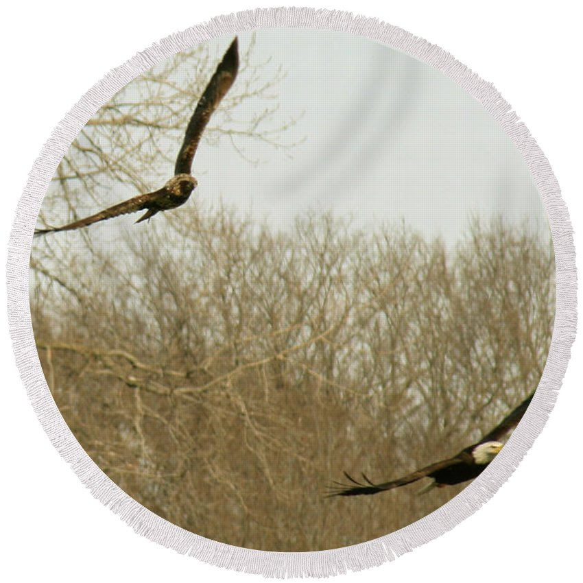 Bald Eagle Round Beach Towel featuring the photograph Adult And Immature Bald Eagle Flying by Crystal Heitzman Renskers