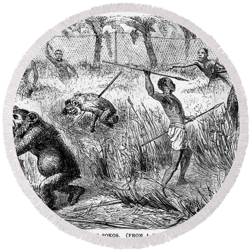 1870 Round Beach Towel featuring the photograph Africa: Ape Hunting by Granger