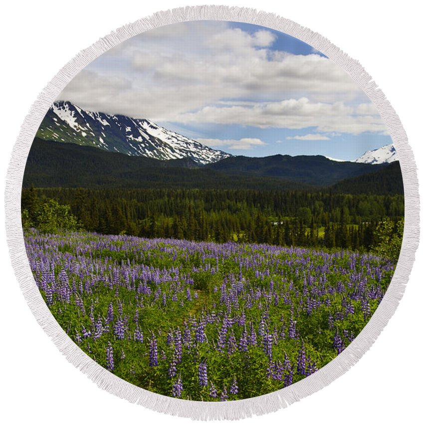 Alaska Lupine Round Beach Towel featuring the photograph Alaska Lupine by Wes and Dotty Weber