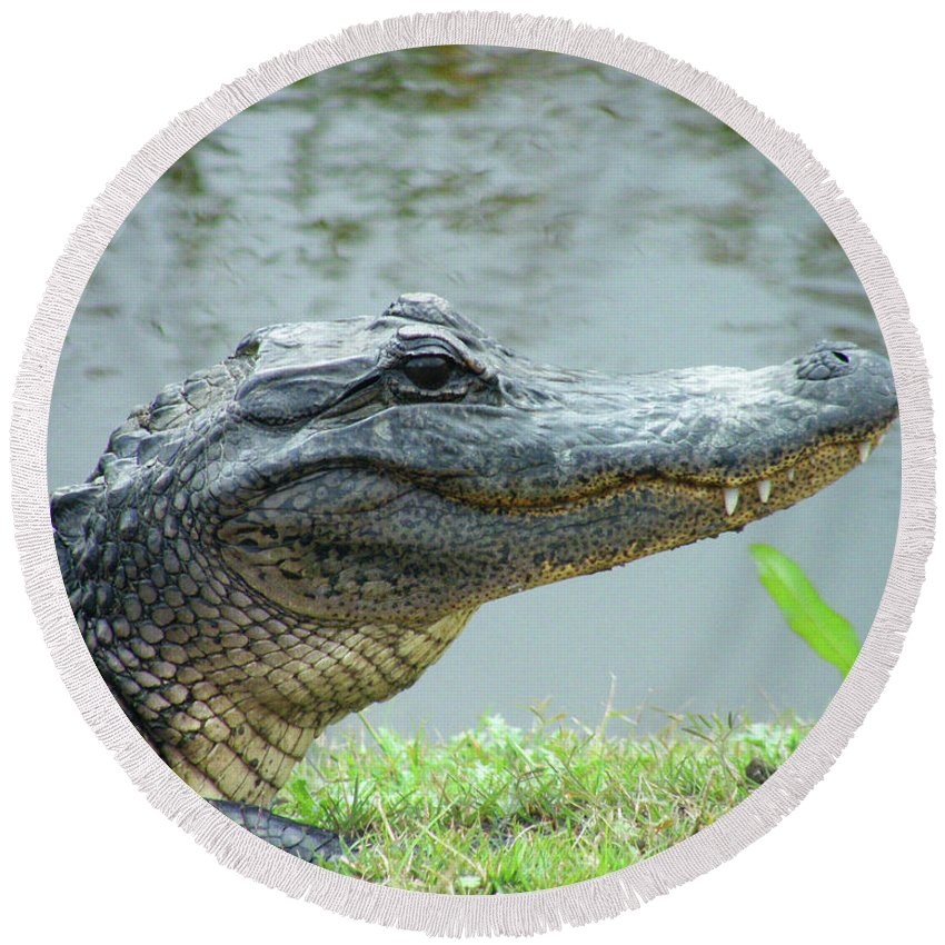 Gator Round Beach Towel featuring the digital art Alligator Cameron Prairie Nwr La by Lizi Beard-Ward
