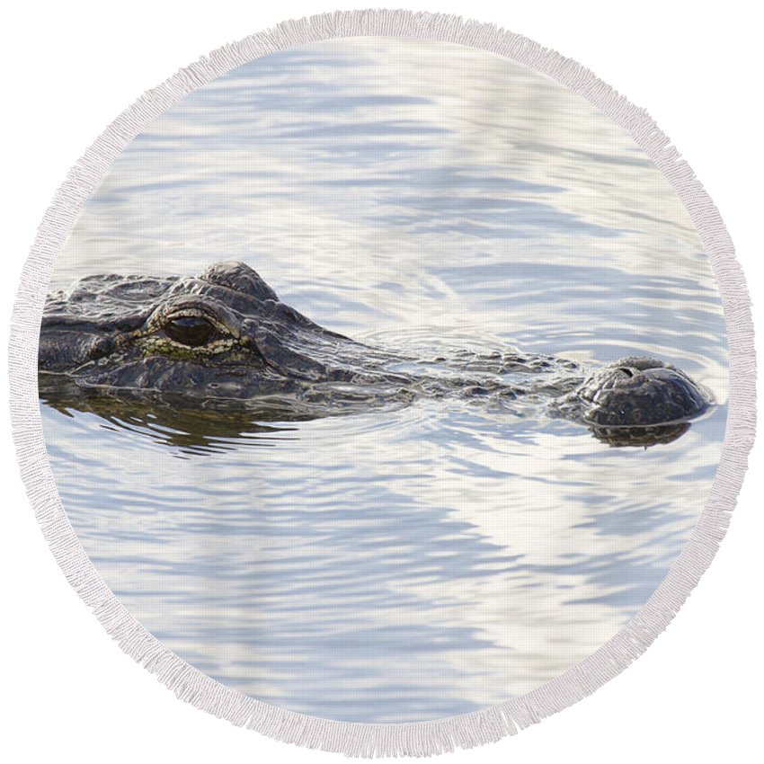 Alligator Round Beach Towel featuring the photograph Alligator With Sky Reflections - A Closer View by Bill Swindaman
