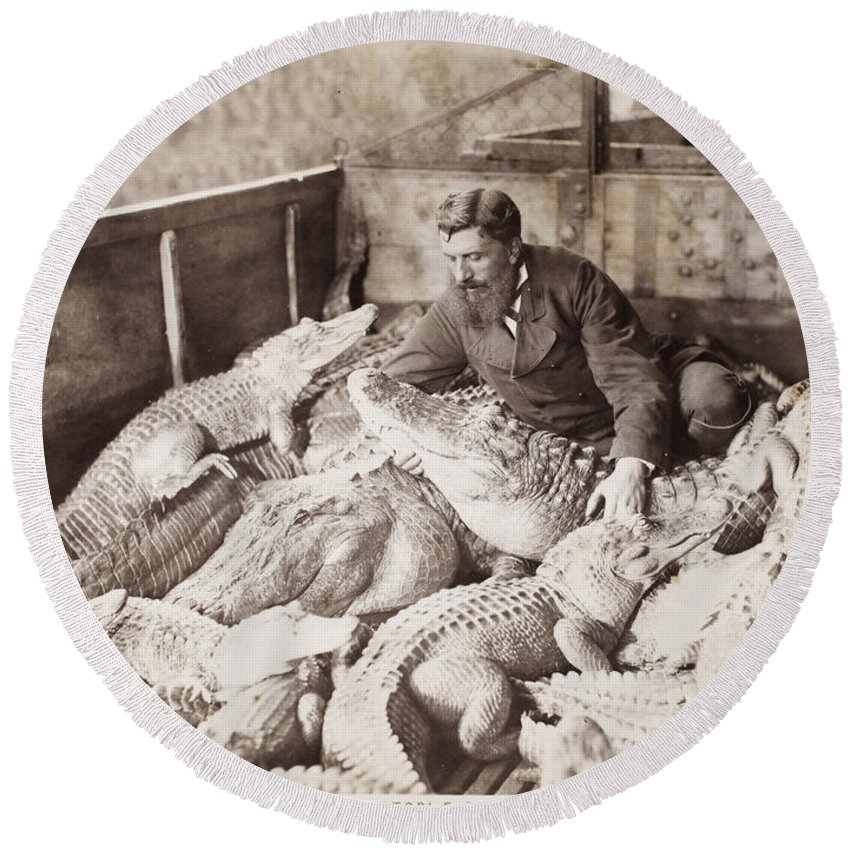 1880 Round Beach Towel featuring the photograph Alligators & Caymans by Granger
