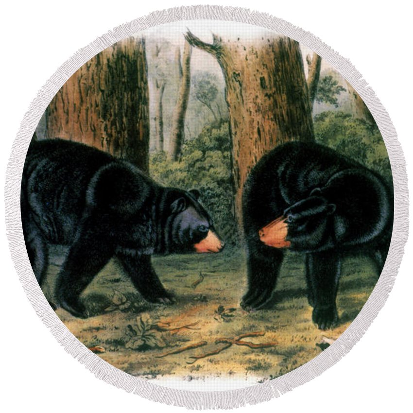 1844 Round Beach Towel featuring the photograph American Black Bear, 1844 by Granger