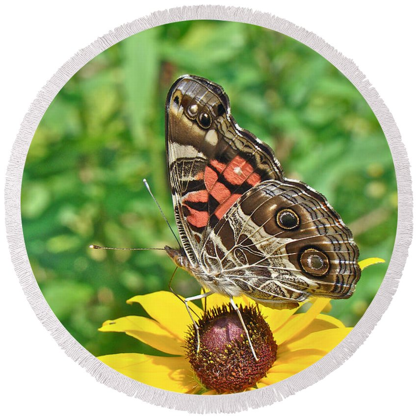 American Lady Butterfly Round Beach Towel featuring the photograph American Lady Butterfly Underwing - Vanessa Virginiensis by Mother Nature