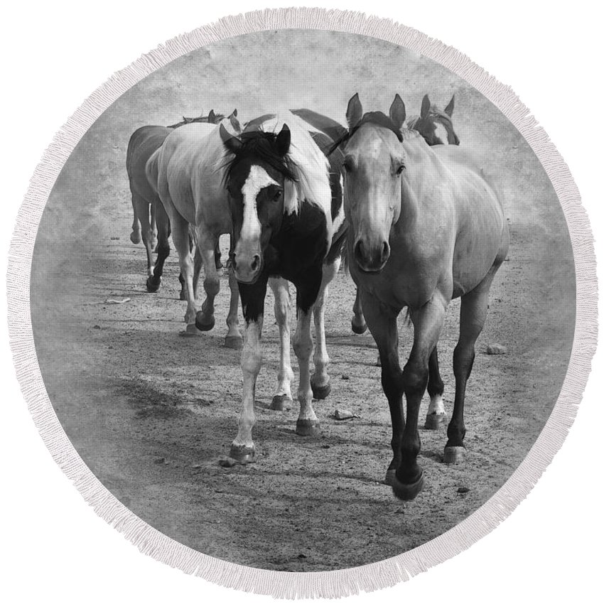 American Quarter Horse Round Beach Towel featuring the photograph American Quarter Horse Herd In Black And White by Betty LaRue