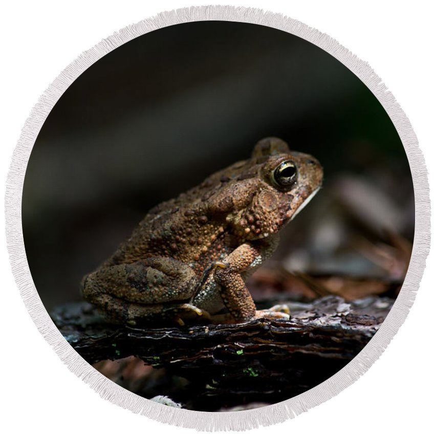 Scott Round Beach Towel featuring the photograph American Toad by Scott Hervieux