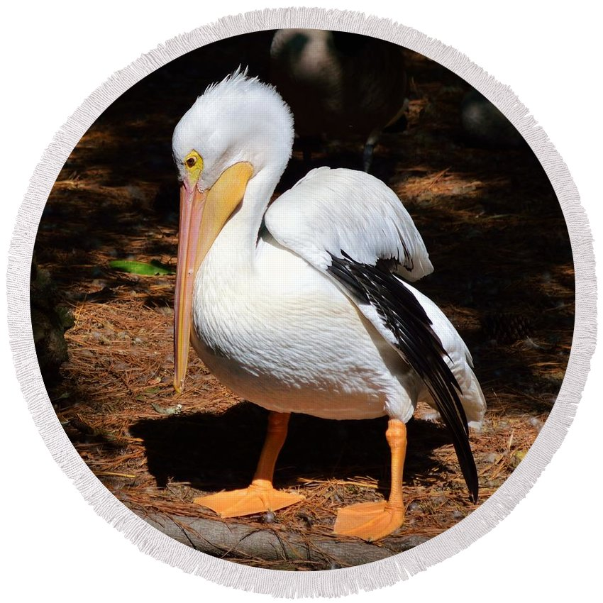 Animal Round Beach Towel featuring the photograph American White Pelican by William Bartholomew