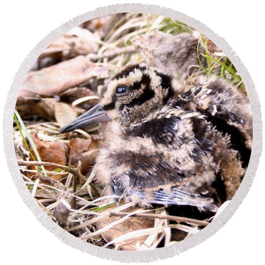 Woodcock Round Beach Towel featuring the photograph American Woodcock Chick by Angie Rea