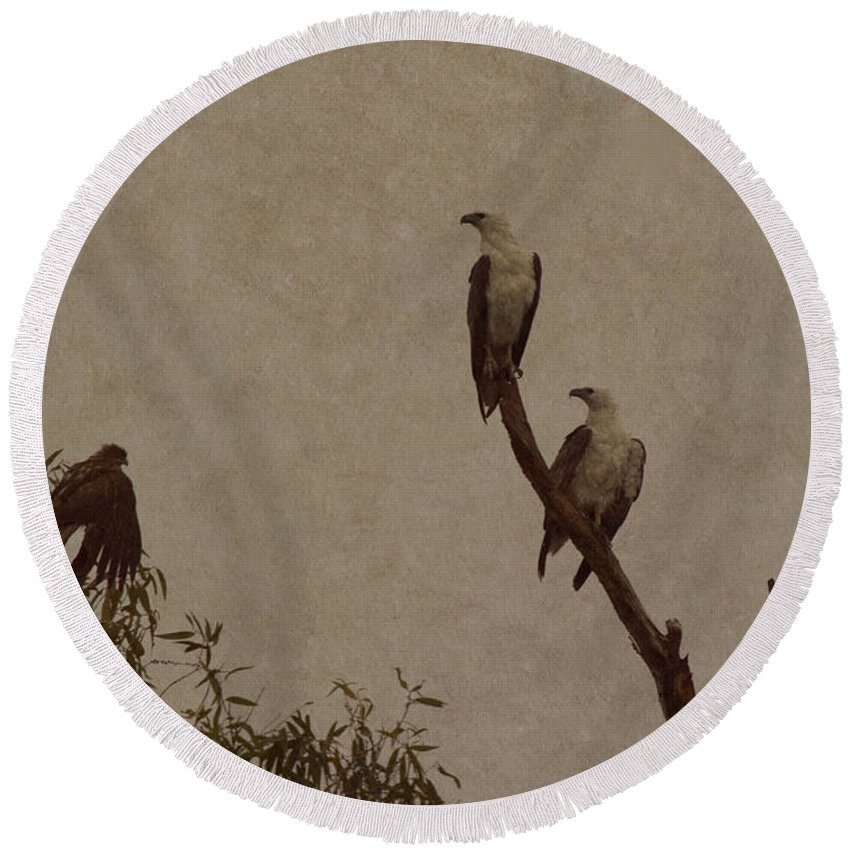 Round Beach Towel featuring the photograph And Baby Makes Three by Douglas Barnard