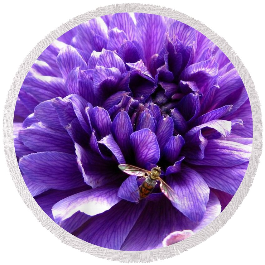 Anemone Round Beach Towel featuring the photograph Anemone Coronaria Named Lord Lieutenant by J McCombie