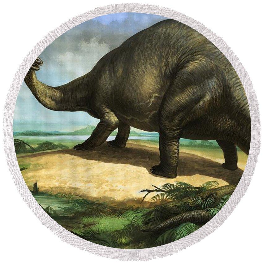 Apatosaurus; Dinosaur; Pre-historic; Prehistoric; Animal; Dinosaurs Round Beach Towel featuring the painting Apatosaurus by William Francis Phillipps
