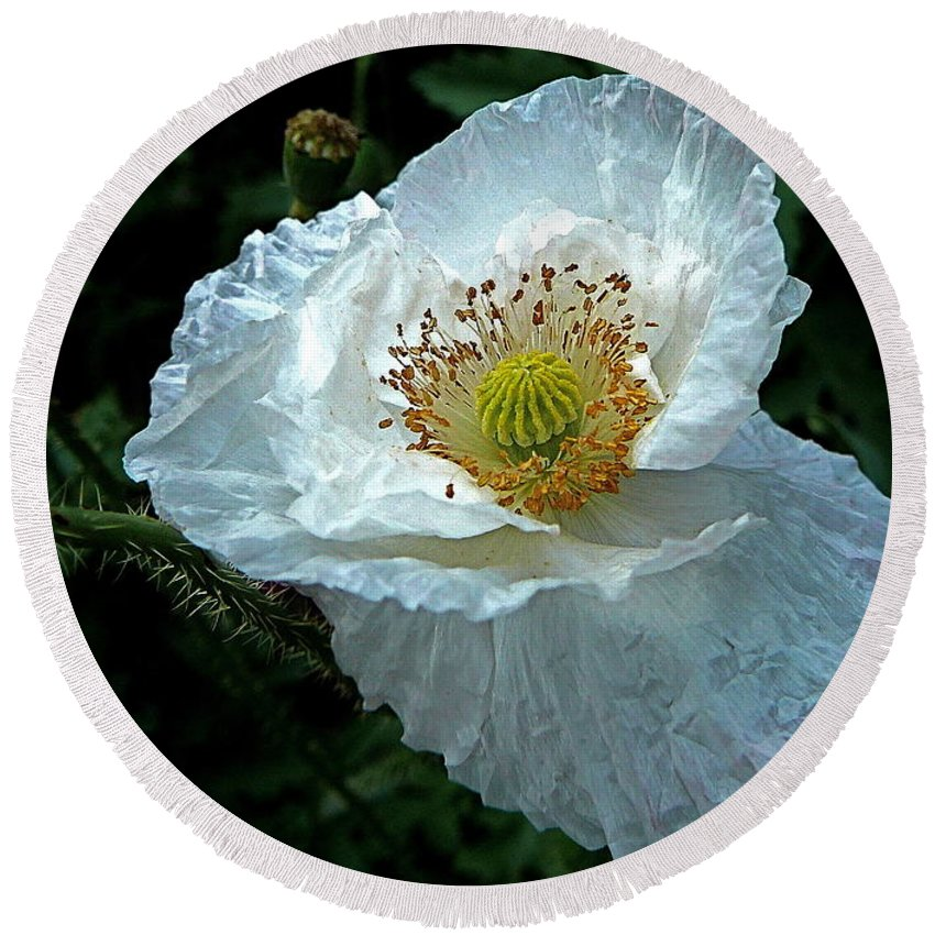 Poppy Round Beach Towel featuring the photograph Arctic Poppy by Byron Varvarigos