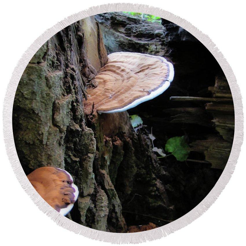 Mushroom Round Beach Towel featuring the photograph Artist Conk Mushroom by September Stone