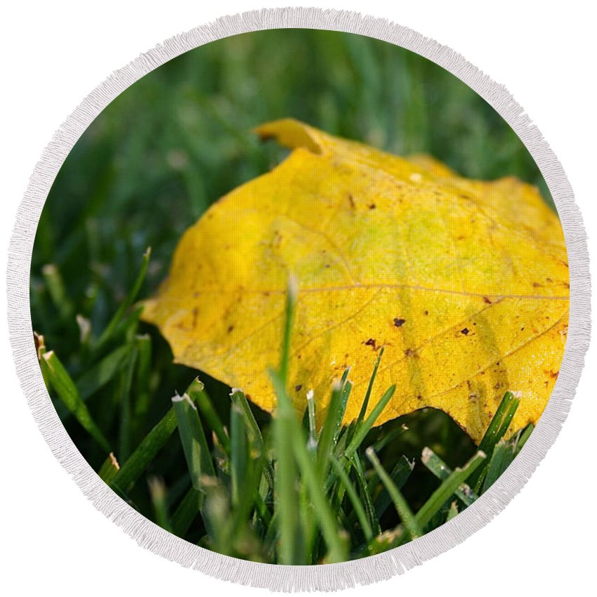 Outdoors Round Beach Towel featuring the photograph Aspen Leaf by Susan Herber