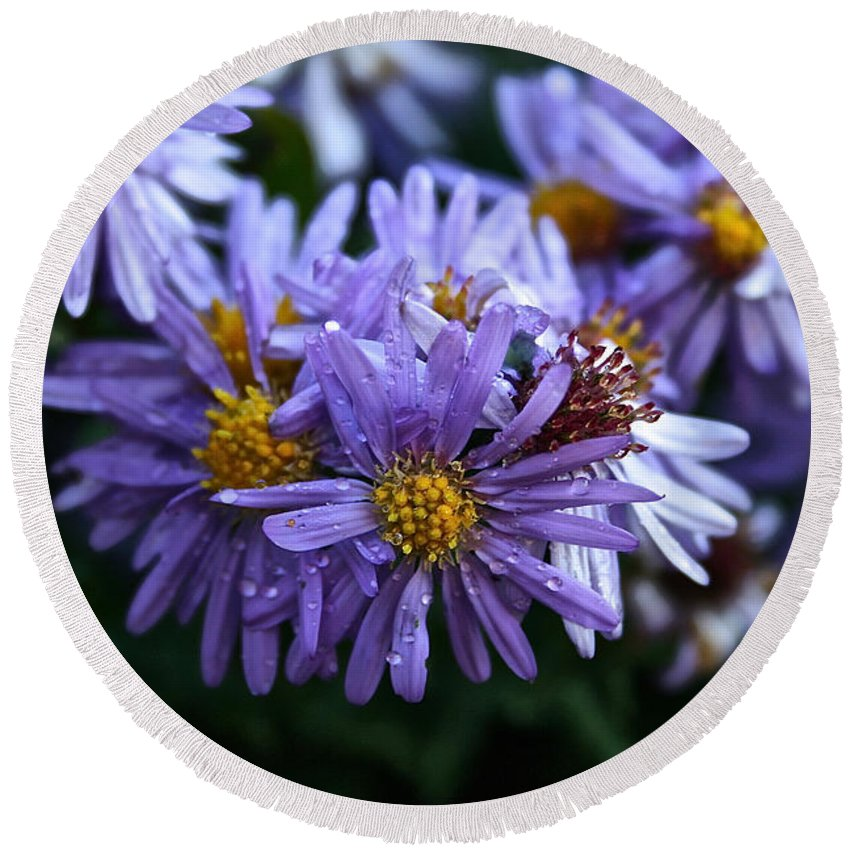 Flower Round Beach Towel featuring the photograph Aster Dew Drops by Susan Herber
