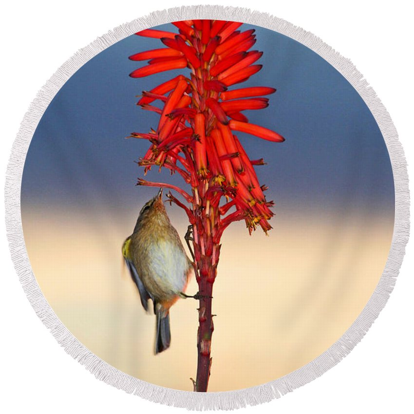 Bird Round Beach Towel featuring the photograph Atlantic Canary by Ralf Kaiser