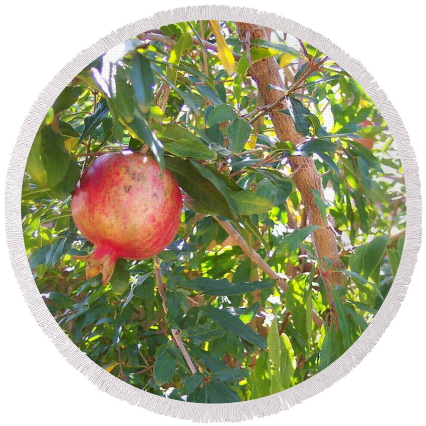 Pomegranate Round Beach Towel featuring the photograph Aunt Tissy's Pomegranate Tree by Nancy Patterson