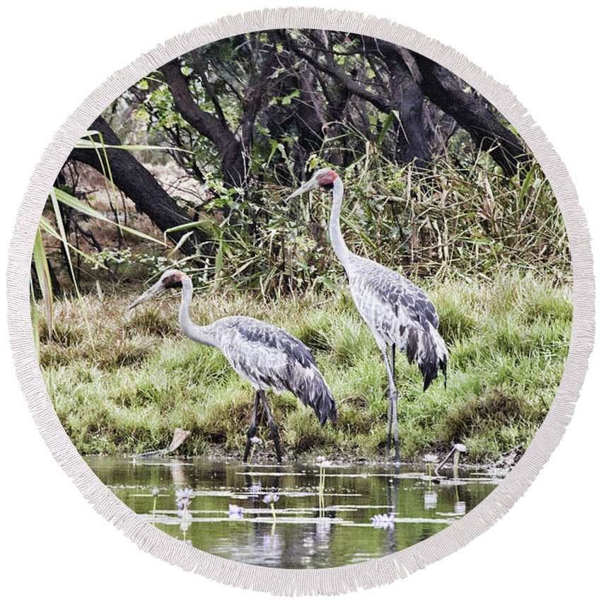 Corroboree Billabong Round Beach Towel featuring the photograph Australian Cranes At The Billabong by Douglas Barnard