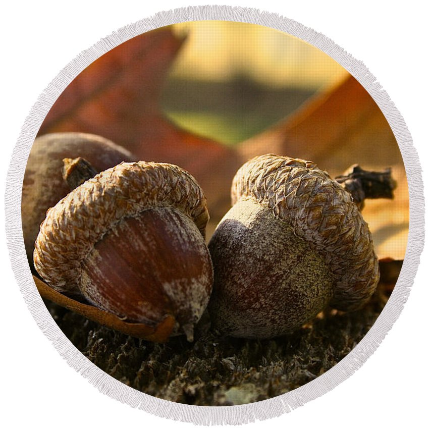 Outdoors Round Beach Towel featuring the photograph Autumn Acorns by Susan Herber