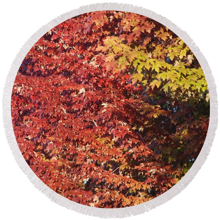 Fall Round Beach Towel featuring the photograph Autumn Arrival by Michael Merry
