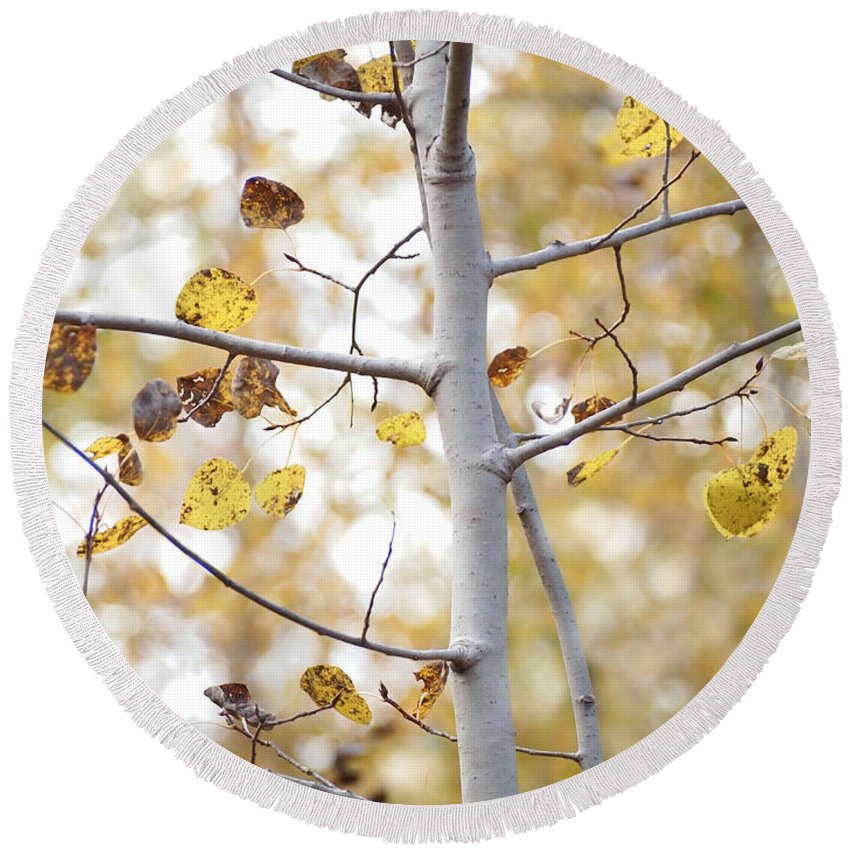 Aspen Round Beach Towel featuring the photograph Autumn Aspens by Angie Rea