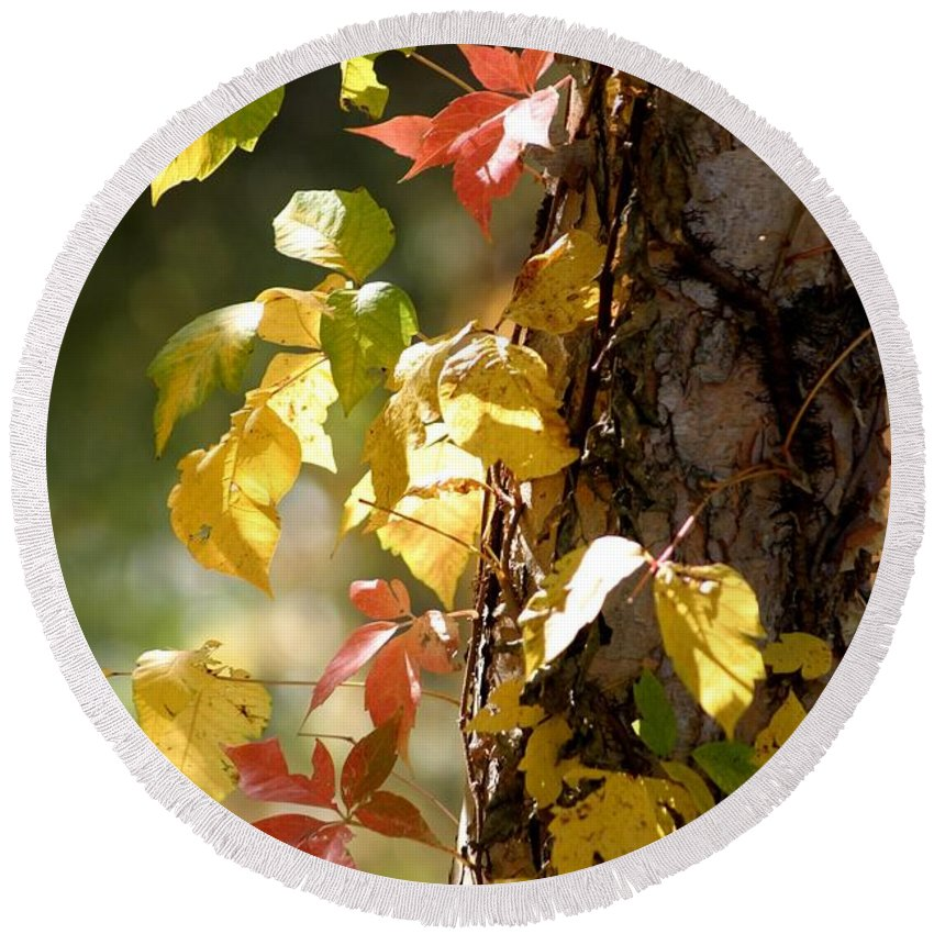 Autumn Round Beach Towel featuring the photograph Autumn Colors by Living Color Photography Lorraine Lynch