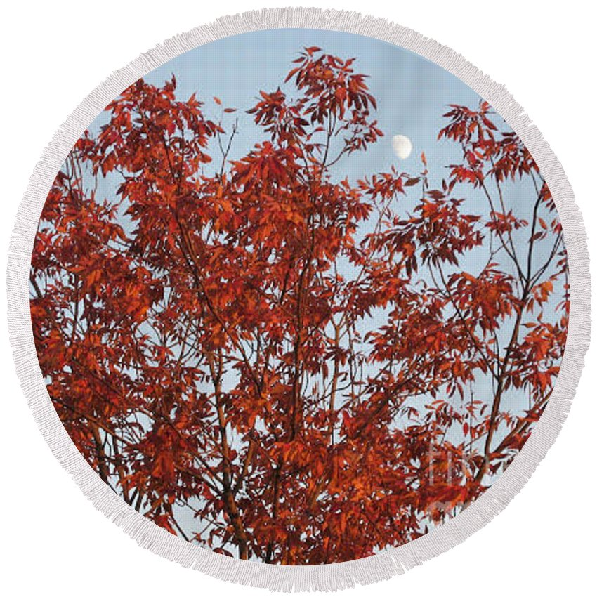 Red Brown Leaves Round Beach Towel featuring the photograph Autumn Moon by Sonali Gangane